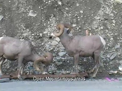 Waterton-Glacier International Peace Park: Wildlife Project by Rachelle Raymer-Gilbert