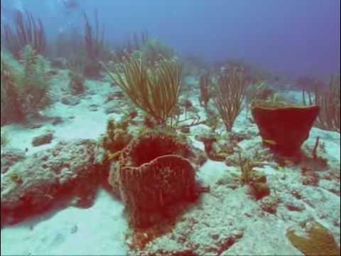 Watamula shore diving