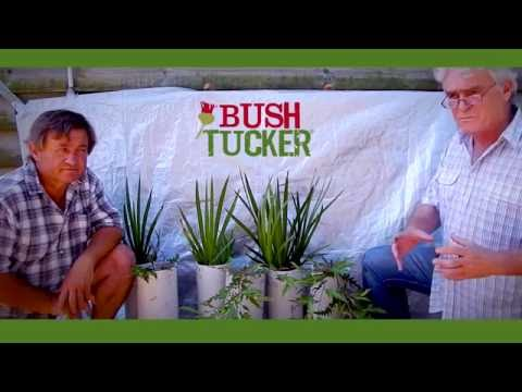 Bush Tucker Trial With Angus Stewart & Simon Leake