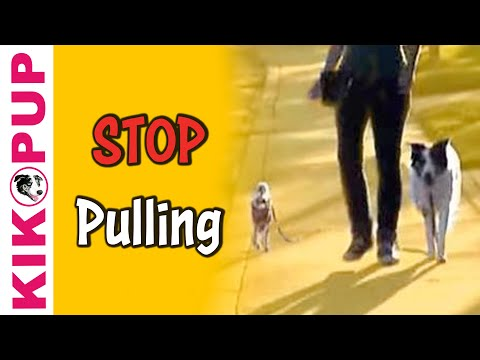Train your dog to STOP pulling on leash - Dog Training