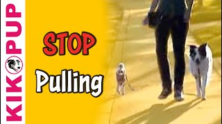 How to train your dog not to pull- Loose Leash Walking