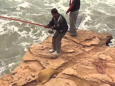 Le costume pour la pêche combien de lui se trouve