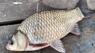 Ловля карася на реке Рыбалка для начинающих Рыбалка на фидер Рыбалка 2021