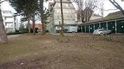 Radikale Baumabholzung in Lindau am See(3)