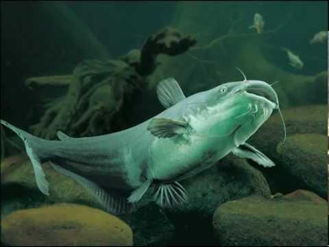 Yelawolf - Catfish Billy HD