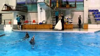 Свадьба в дельфинарии