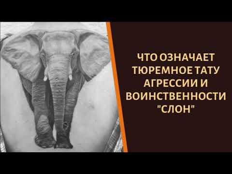 Что означает тюремное тату агрессии и воинственности «Слон»?