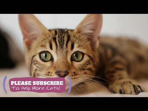 Music for Cats - 2 Hours Relaxing ASMR for Your Cats! ☯LCZ110