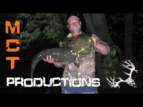 Channel Cat Mangled By A Flathead, And A 26lb Flathead