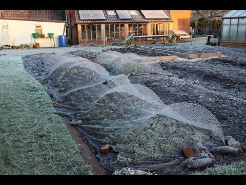 Growing and harvesting vegetables outdoors in winter, zone 8/9, 51N