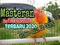 Lovebird Betina Konslett Mantapp Gaesss Ngeban(.mp3 .mp4) Mp3 - Mp4 Download