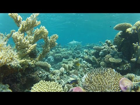 VIrtual aquarium / fish tank - stationary shot of a coral reef on Kwajalein, Marshall Islands