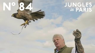 The Art of Falconry: Roaming the Countryside with Trained Birds of Prey (Hampshire, England)
