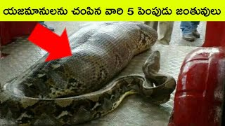 Top 5 Pet Animals That killed their owners | Bmc Facts | Telugu