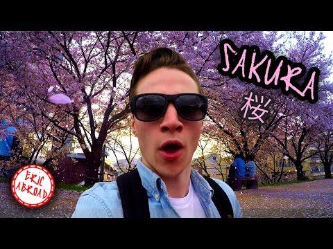 Sakura Season in Kyoto, Japan! 初めて京都の花見