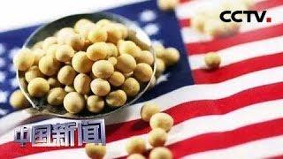[中国新闻] 中美经贸摩擦 大豆期货跌至逾10年来最低   CCTV中文国际