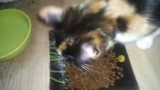 Корм для кошки после родов