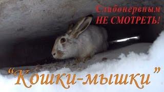 Охота на зайцев - «Кошки-мышки»