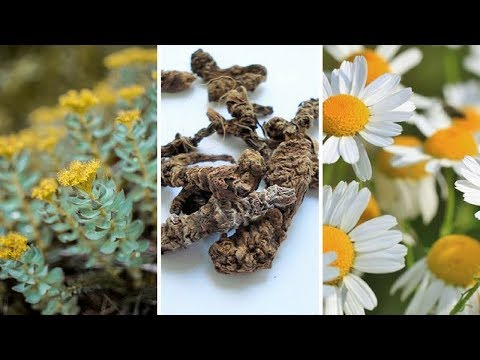 natural-remedies-for-depression-[top-five-herbs-for-depression]