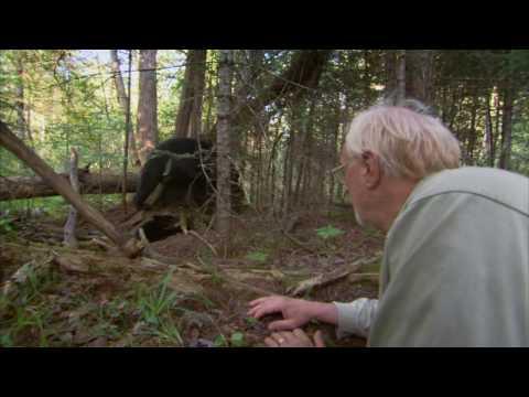 Bearwalker of the Northwoods (Demo Clip)
