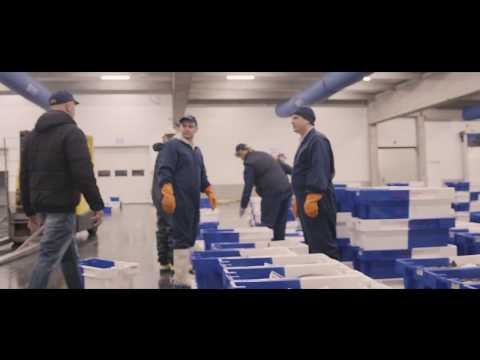 All Fish Boxes In Belgian Fish Auctions Equipped With RFID Tag