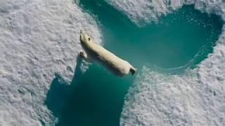 أنا هشة Trailer - المحيط السينمائي جولة حول العالم AU 2019