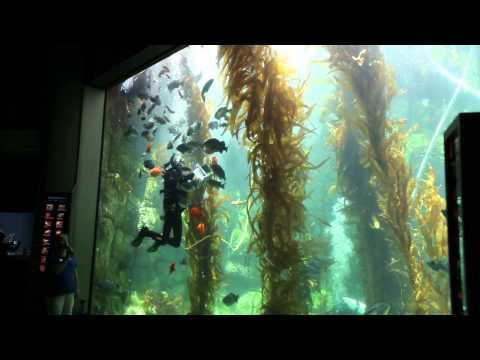 Birch Aquarium - Getaway San Diego
