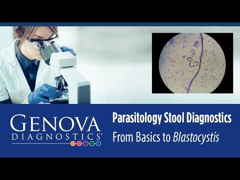 blastocystis hominis aeped
