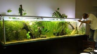 Acuario de 1000 litros - Santuario Aquatico