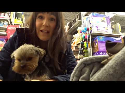 Yorkie Fashion show poppin them tags and messing up the PetSmart Vlog