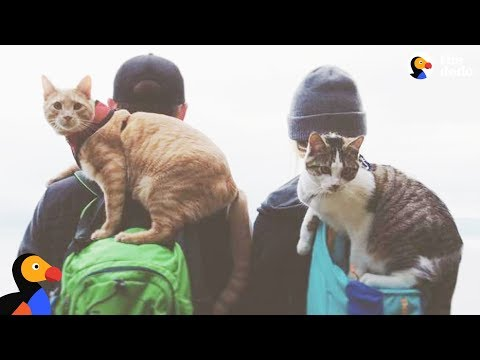 Adventure Cat Gets A Baby Brother - FISH & CHIPS | The Dodo