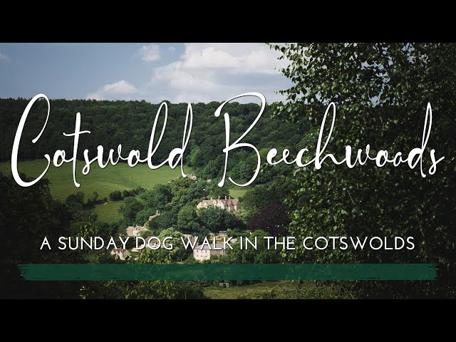 Cotswold Beechwoods   A Sunday Dog Walk Beneath the Beech Trees   Relaxing Nature Vlog   No Talking