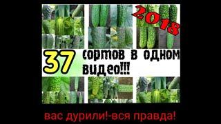 видео Лучшие сорта огурцов