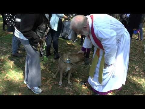 Blessing of the Animals at Cathedral of St  John the Divine