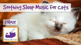 1 HOUR RELAXING MUSIC FOR CATS & KITTENS Help Your Pet Sleep with Soothing Sounds! 🐱 #SLEEP14