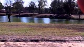 Carolinas Silver Smoke Senior Hunt Test Part 3 Water