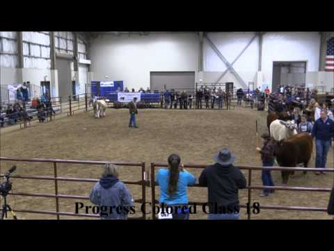 MJC Winter Cattle Classic: Progress Colored Classes 17-21