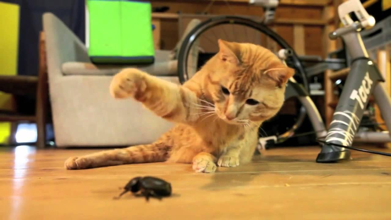 Tired of insects? A perfect non-toxic insect/bug exterminator: the cat! ( insect vs cats compilation) - YouTube