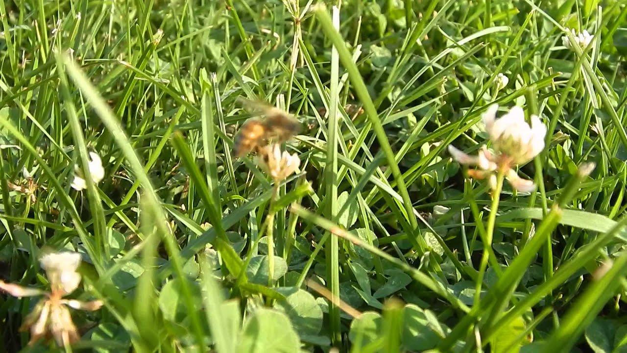 Atlanta, GA No Kill Bee removal 678-792-8053 Honey Bee Control