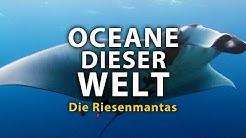 Ozeane dieser Welt - Die Riesenmantas (2011) [Dokumentation] | Film (deutsch)