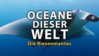 Ozeane dieser Welt - Die Riesenmantas 2011 Dokumentation | Film deutsch