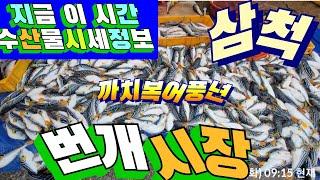 삼척번개시장 수산물시세 최신정보(6/22) 견문록 모조…