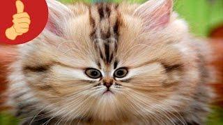 прикольные фото котов с подписями.Зарядись позитивом3