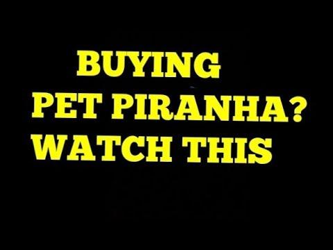 Thinking Of Buying Pet PIRANHA ? WATCH THIS FIRST (piranha Film)