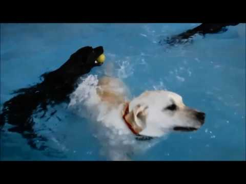 Dog Daycare swimming at the paw