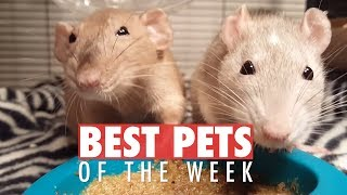 weirdly cute pets you should own