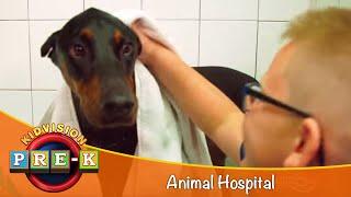 Take a Field Trip to the Animal Hospital | KidVision Pre-K