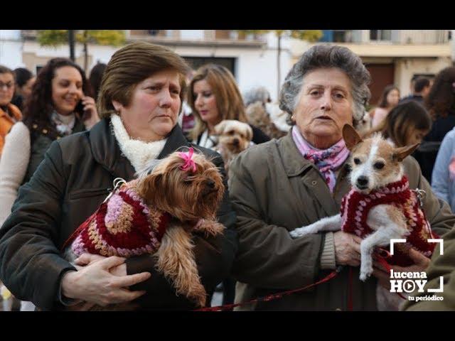 VÍDEO: Más de 150 mascotas reciben el agua bendita de San Antón en Santiago