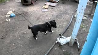 ▶ Кот дерется с Собакой Jiu Jitsu Cat vs Dog Funny Fight HD