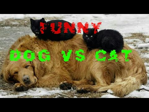 Dog vs Cat!!perfect funny videos!!by funny maker #####